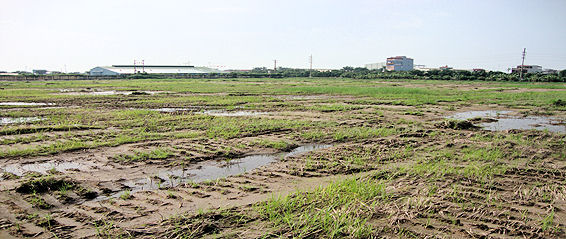 The site for the proposed hospital project at Dai An Industrial Zone, Hai Duong province, Vietnam